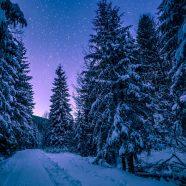 Wie lassen sich Winterdepressionen bekämpfen?